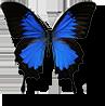 ulyssys butterfly